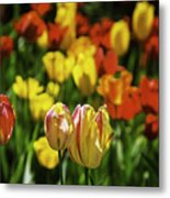 Mountain Tulips Metal Print