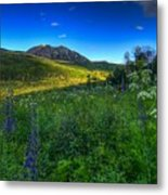 Mountain Wildflowers And Light Whispers Metal Print