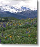Mountain Wildfowers Metal Print