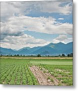 Mountains And Fields Metal Print