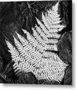 Mounts Botanical Garden 2365 Metal Print