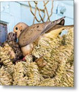 Mourning Dove And Chick Metal Print