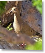 Mourning Dove On The Hillside Metal Print
