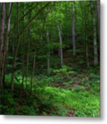 Mouth Of Pollly Hollow Metal Print