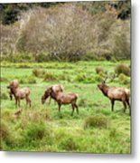 Move Along Now Metal Print