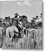 Moving Cattle Metal Print