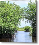 Moving The Glades Of Roatan Metal Print