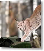 Moving Through The Forest Metal Print