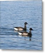 Mr. And Mrs. Brant Metal Print