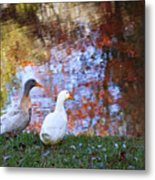 Mr And Mrs Duck Metal Print