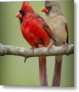 Mr. And Mrs. Northern Cardinal Metal Print by Bonnie Barry