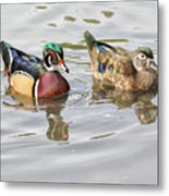 Mr. And Mrs. Wood Duck Metal Print