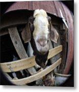 Mr B Goat Metal Print