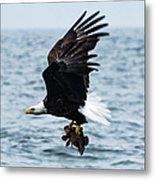 Mr. Bald Eagles Catch Metal Print