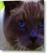 Mr. Blue Eyes Metal Print