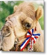 Mr. Camel Metal Print