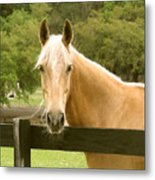 Mr. Ed Metal Print