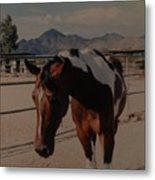 Mr Ed Metal Print