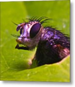 Mr. Fly Metal Print