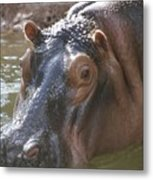 Mr. Hippo Metal Print