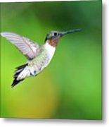 Mr. Humming Bird Metal Print
