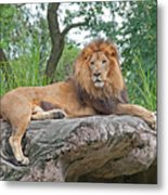 Mr Majestic Metal Print