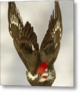Mr. P On The Wing Metal Print