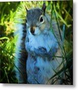 Mr. Squirrel Metal Print