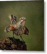 Mrs. Red Winged Blackbird Metal Print