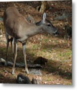 Ms Doe Metal Print