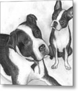 Ms Proutys Dogs Metal Print