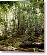 Mt Field Forest Metal Print