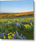 Mt. Hood Wildflower Morning Metal Print