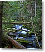 Mt Hood Wilds Metal Print
