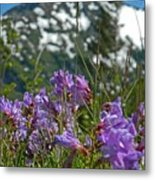 Mt. Rainier Wild Flowers Metal Print