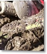 Mud Is Love Metal Print