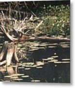 Mud Lake Landscape - Photograph Metal Print