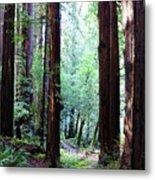 Muir Woods 1 Metal Print