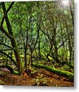 Muir Woods Rejuvenation Metal Print
