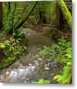 Muir Woods Stream Metal Print