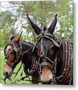 Mule Days 2 Metal Print