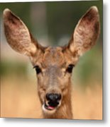 Mule Deer Being Playful Metal Print