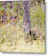 Mule Deer Doe In The Pike National Forest Metal Print