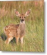 Mule Deer Fawn Is All Ears Metal Print