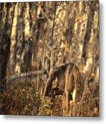 Mule Deer In Aspen Thicket Metal Print