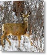 Mule Deer Portrait In Heavy Snow Metal Print