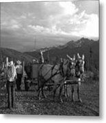 Mule Drawn Wagon Metal Print
