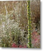 Mullin And Other Springtime Wildflowers Metal Print