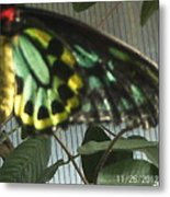 Multi-colored Butterfly Metal Print