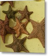 Multi-colored Star Fish On The Sand Metal Print